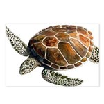 Green Turtle Postcards (Package of 8)