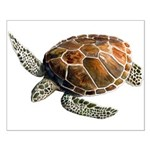 Green Turtle Small Poster