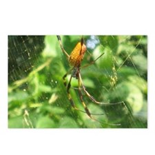 Spider LifePostcards (Package of 8)