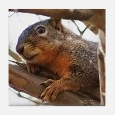 Nuts About Squirrels Tile Coaster