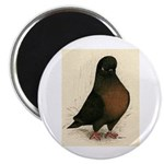 Kite Tumbler Pigeon Magnet