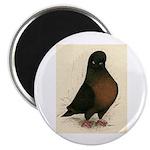 "Kite Tumbler Pigeon 2.25"" Magnet (100 pack)"