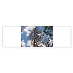 Tree n Sky Bumper Bumper Sticker