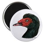 "Muscovy Duck Head Black 2.25"" Magnet (100 pac"