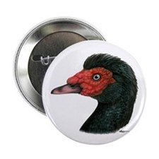 "Muscovy Duck Head Black 2.25"" Button (100 pac"