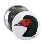 """Muscovy Duck Head Black 2.25"""" Button (10 pack"""