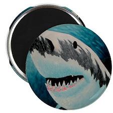 Shark - Magnet