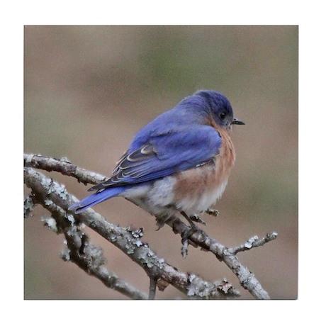 Perching Bluebird Tile Coaster