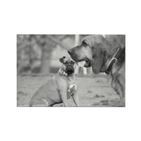 Boxer and Bloodhound Rectangle Magnet (100 pack)