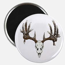 whitetail skull Magnet