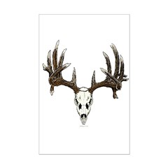 whitetail skull Posters