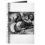 Giant Homer Pigeons Journal