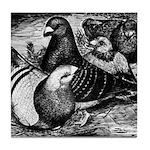 Giant Homer Pigeons Tile Coaster