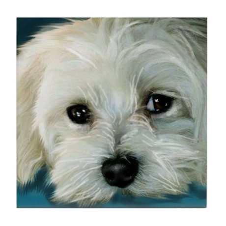 MALTESE DOG BOY Tile Coaster