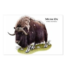 Musk Ox Postcards (Package of 8)