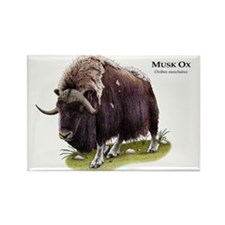 Musk Ox Rectangle Magnet