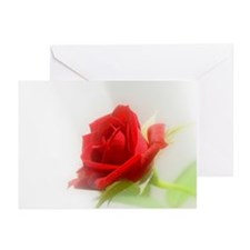 Sifted Sunlight Rose Greeting Cards (Pk of 20)