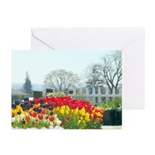 Simply tulips Greeting Cards (Pk of 10)