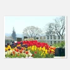 Simply tulips Postcards (Package of 8)