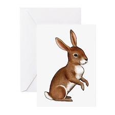 Bunny Rabbit Greeting Cards (Pk of 20)