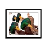 Just Ducky Framed Panel Print