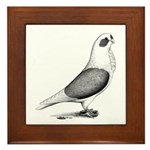 Turbiteen Pigeon Framed Tile