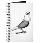 Turbiteen Pigeon Journal