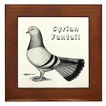 Syrian Fantail Pigeon Framed Tile