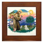St Francis #2 / Maltese (#7) Framed Tile