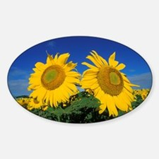 2 Sunflowers Decal