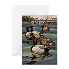 Canvasback Duck Greeting Card