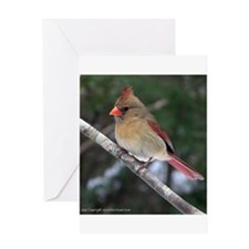 Georgia Birds Greeting Card