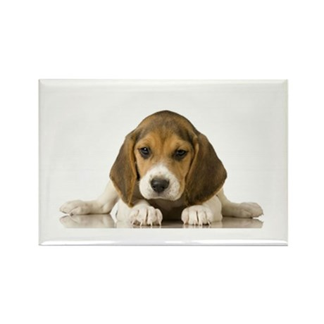 beagle pup Magnets