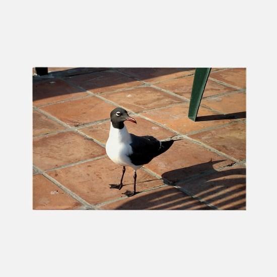 Cute Seagull Rectangle Magnet
