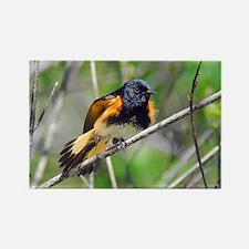 American Redstart Rectangle Magnet