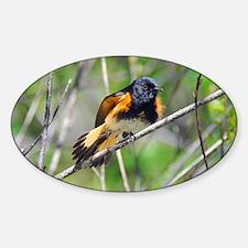 American Redstart Decal