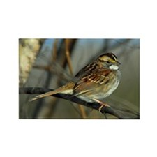 White-throated sparrow Rectangle Magnet