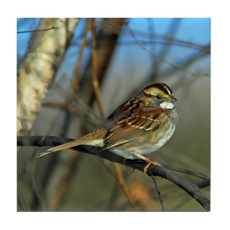 White-throated sparrow Tile Coaster