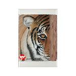 Pastel Drawing PAWS Tiger Rectangle Magnet
