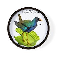 American Purple Gallinule Wall Clock