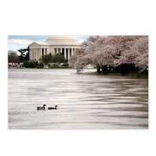 Funny Washington dc cherry blossom Postcards (Package of 8)