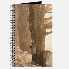 Sap Buckets Journal