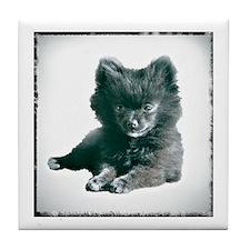 Adorable Black Pomeranian Puppy Tile Coaster