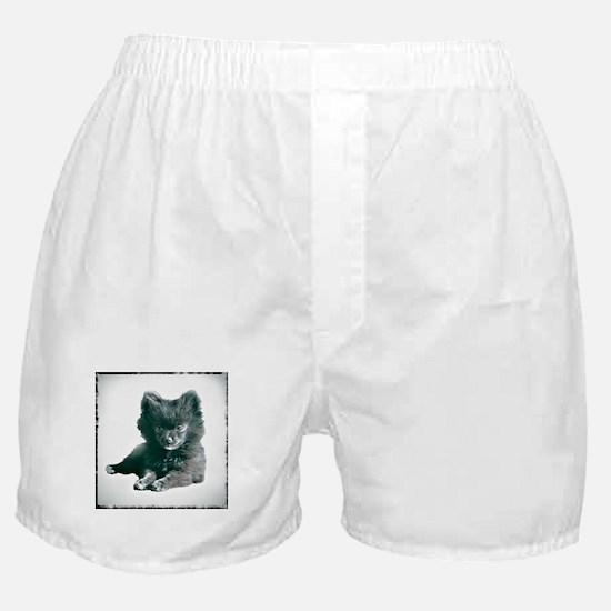 Adorable Black Pomeranian Puppy Boxer Shorts