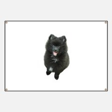 Adorable Black Pomeranian Puppy Dog Banner