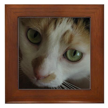 Gorgeous Calico Cat Framed Tile