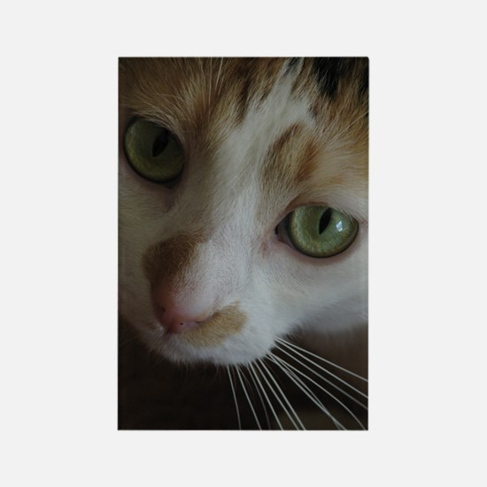 Gorgeous Calico Cat Rectangle Magnet