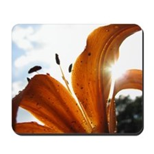 Colorful Lily In Sunlight Mousepad