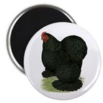 "Cochin: Black Hen 2.25"" Magnet (100 pack)"