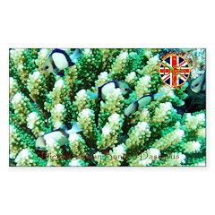 DGS Living Reef 2! Sticker (Rectangle 10 pk)